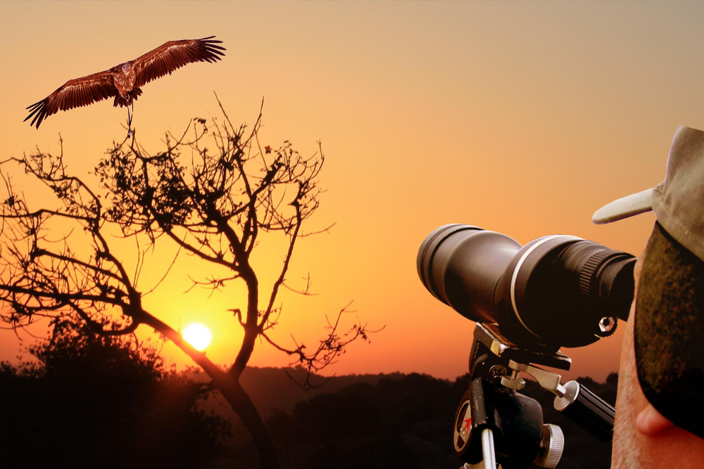 Bird Watching with Taj Mahal Trip